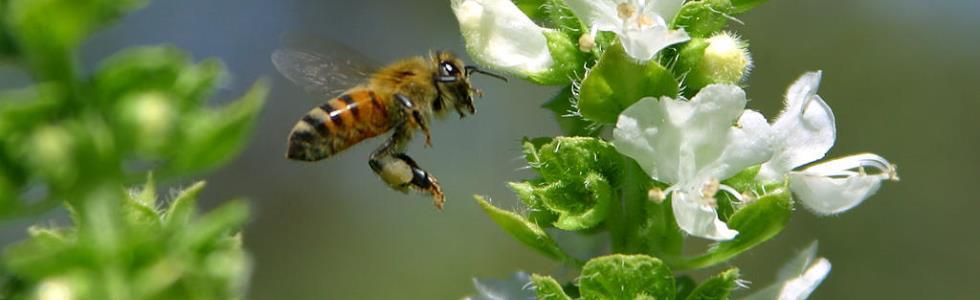 Elöverkänslig ser biodling som framtiden
