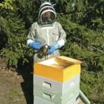 Sylvia Ljung ser biodling som framtiden.